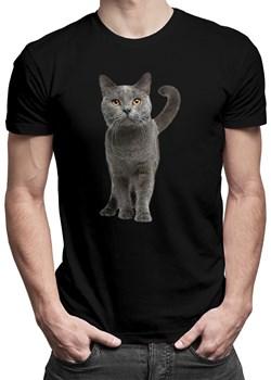 Kot brytyjski - męskakoszulka z nadrukiem okazja Koszulkowy - kod rabatowy