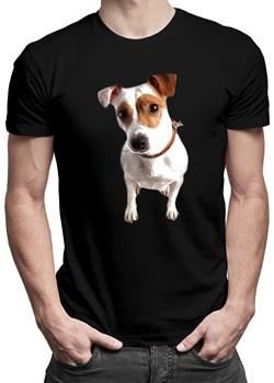Jack Russell terrier - męska koszulka z nadrukiem Koszulkowy wyprzedaż - kod rabatowy
